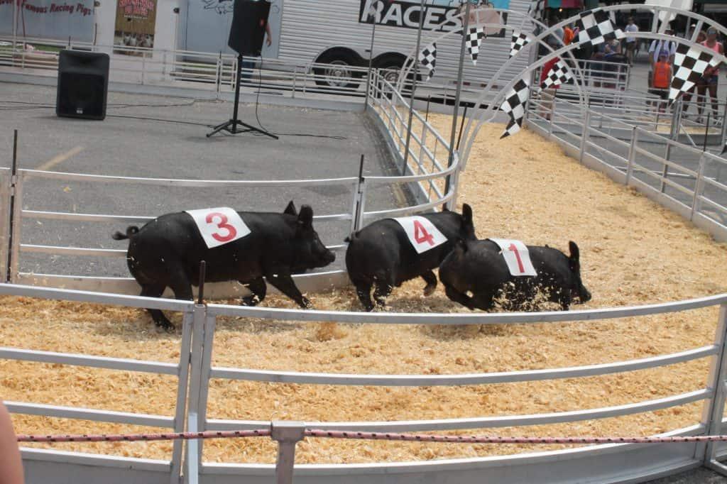 Ohio State Fair 7